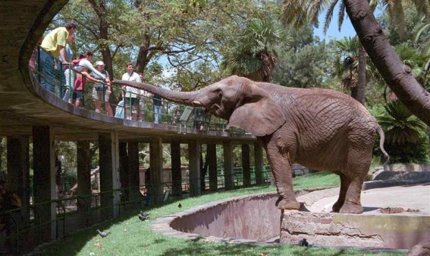zoo_barcelona_kids_family_animals_elephant_food